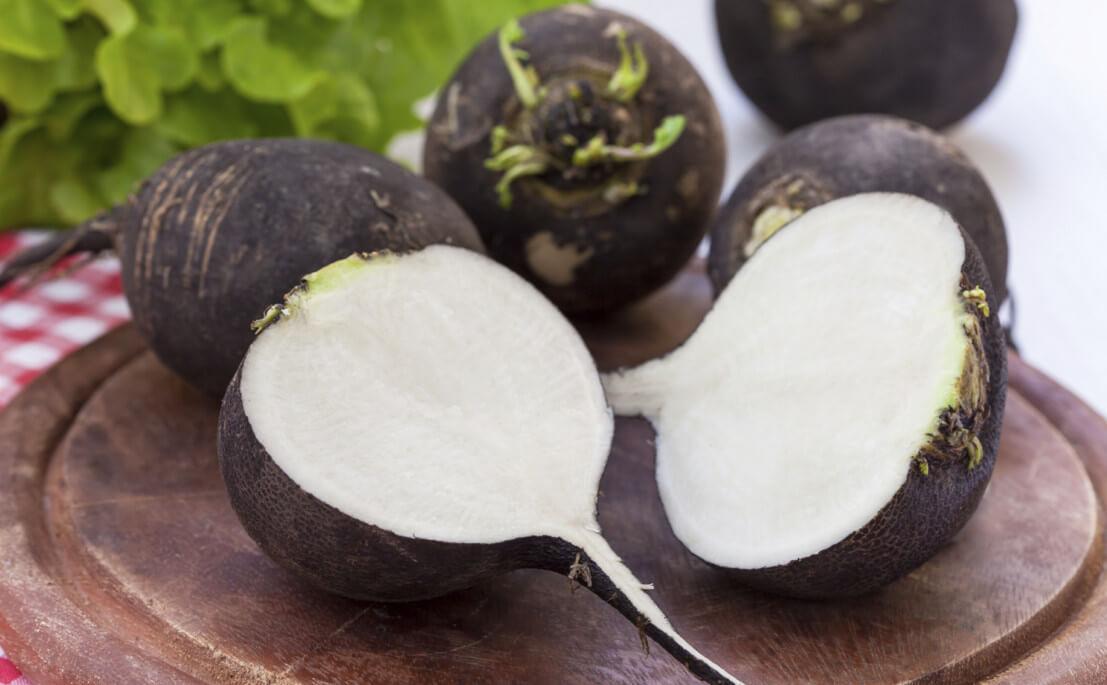 Редька: польза и вред популярного корнеплода для организма