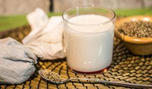 Способы приготовления молока из семени конопли