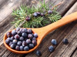 Лечебные свойства хвойного растения можжевельник