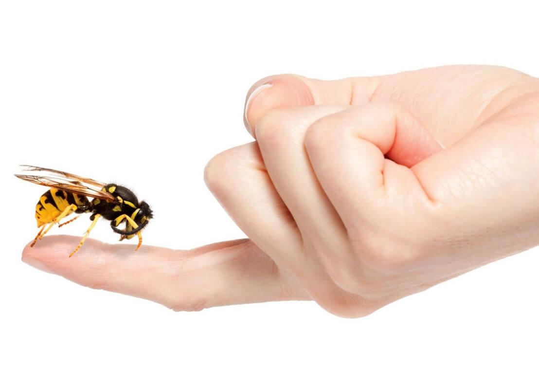 Лечение пчелоужалением: целебные свойства яда и как он действует