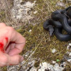 Первая медицинская помощь при укусе змеи: пошаговое руководство