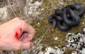 Опасные змеи в лесу
