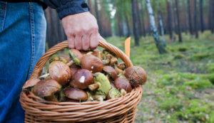 Признаки отравления и интоксикации организма после употребления грибных блюд
