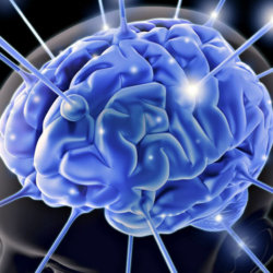 Лимбическая система мозга: строение и функционирование