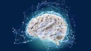 Интеллектуальные функции неокортекса