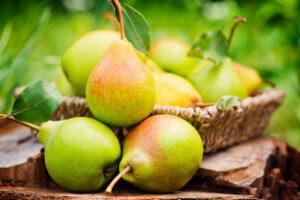 Чем полезны груши: основные рекомендации по употреблению