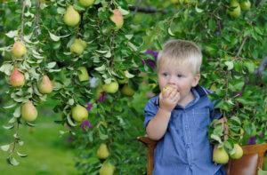 Груша в полезных блюдах ребенка