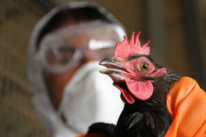 Возбудитель птичьего гриппа