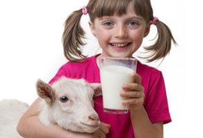 Польза козьего молока для организма