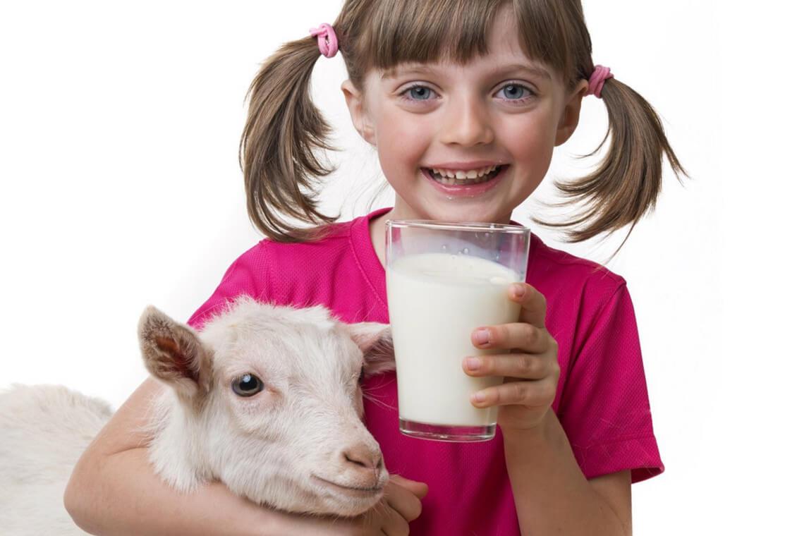 Чем полезно козье молоко при различных заболеваниях