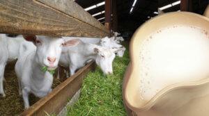 Индивидуальная непереносимость и козье молоко