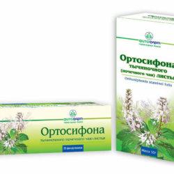 Применение почечного чая: средство народной медицины для лечения мочеполовых заболеваний