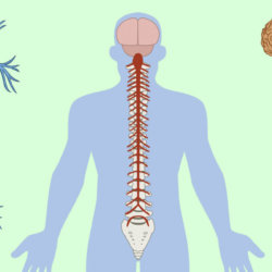 Поражение периферической нервной системы, причины и характерные симптомы