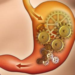 Желудок не переваривает пищу: симптомы расстройства, как устранить проблему