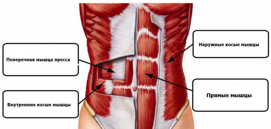Прямые, внутренние и наружные косые мышцы