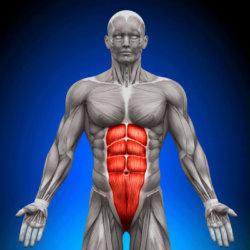 Косая внутренняя мышца живота: ее строение, какие выполняет функции