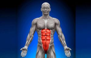 Разновидности брюшных мышц