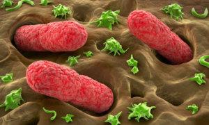 Симптомы нахождения стафилококка в кишечнике