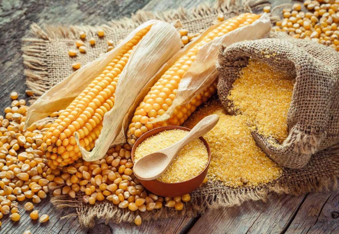 Полезные и вредные свойства кукурузной муки