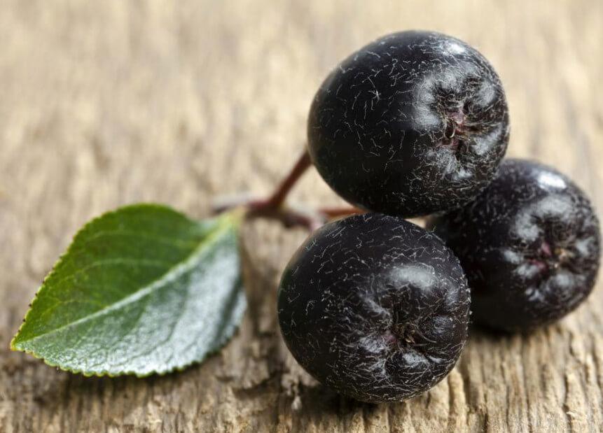Применение черноплодной рябины при высоком давлении